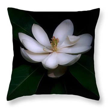 Sweet White Magnolia Bloom Throw Pillow by Louise Kumpf