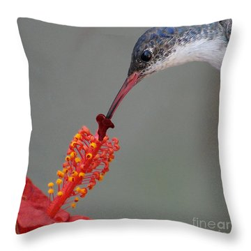 Sipping From A Hibiscus Throw Pillow