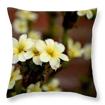 Sisyrinchium Striatum Throw Pillow by Scott Lyons