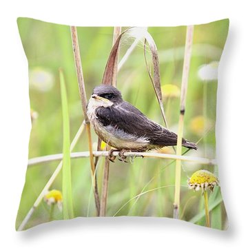 Throw Pillow featuring the photograph Sitin' Pretty by Elizabeth Winter
