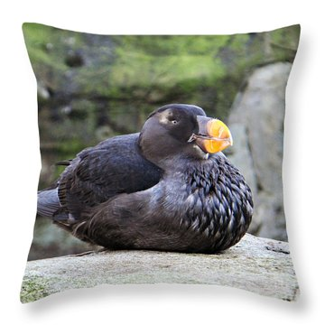Sittin' Pretty Puffin  Throw Pillow by Mindy Bench
