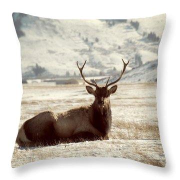 Sitting Bull Elk Throw Pillow by Juli Scalzi