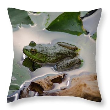 Sitting In The Sun Throw Pillow