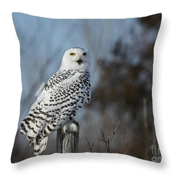 Sitting On The Fence- Snowy Owl Perched Throw Pillow by Inspired Nature Photography Fine Art Photography