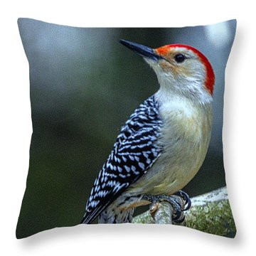 Throw Pillow featuring the photograph Sitting Pretty A Red Bellied Woodpecker by Constantine Gregory