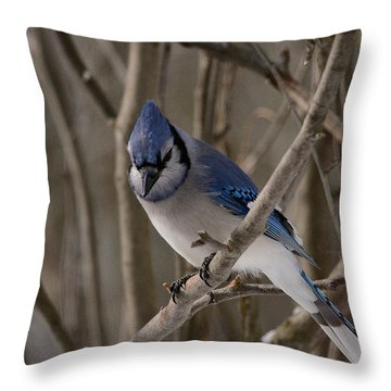 Throw Pillow featuring the photograph Sitting Pretty by David Porteus