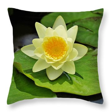 Sitting Pretty Throw Pillow by Jean Goodwin Brooks