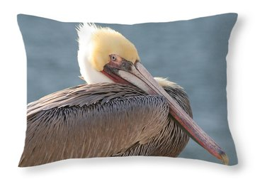 Sitting Pretty Pelican Throw Pillow by Bob and Jan Shriner