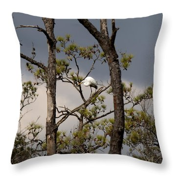 Sitting Pretty Throw Pillow by Rebecca Davis