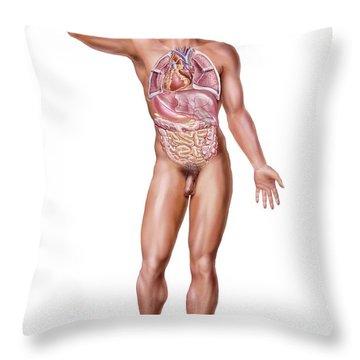 Anatomical Position Throw Pillows