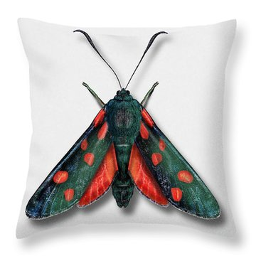 Six Spot Burnet Butterfly - Zygaena Filipendulae Naturalistic Painting - Nettersheim Eifel Throw Pillow