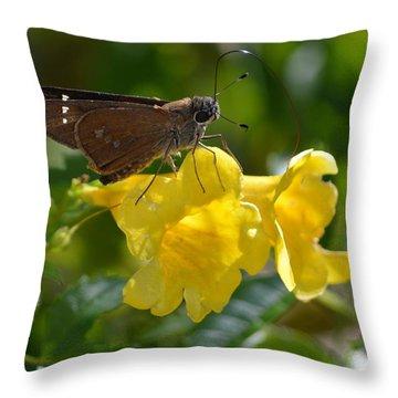 Skipper Butterfly 2 Throw Pillow by Debra Martz