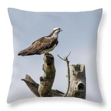Sky Hunter 2 Throw Pillow