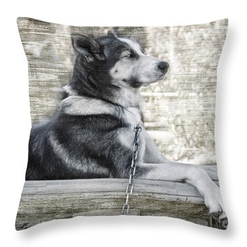 Throw Pillow featuring the photograph Tuya - Sled Dog Of Denali by Dyle   Warren