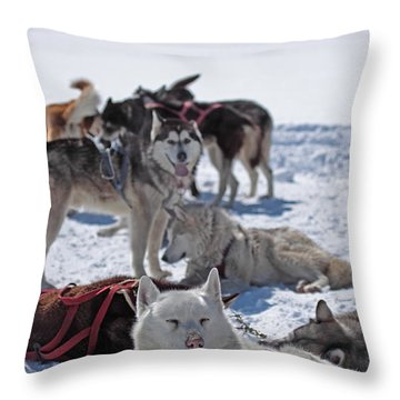 Sled Dogs Throw Pillow
