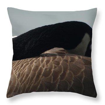 Sleeping Canada Goose Throw Pillow
