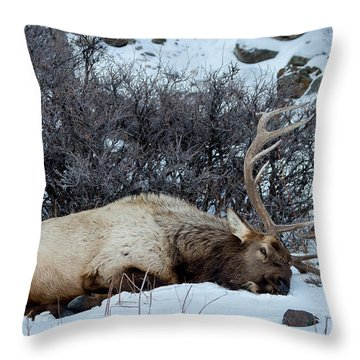 Sleeping Elk Throw Pillow