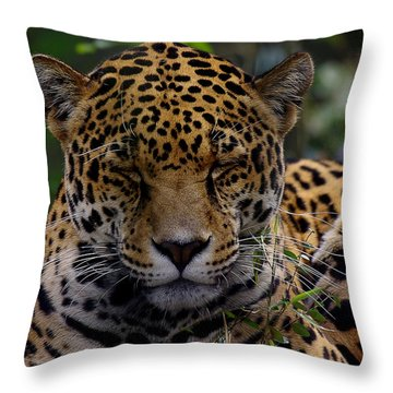 Sleeping Jaguar Throw Pillow