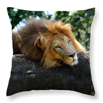 Throw Pillow featuring the photograph Thinking Lion by Lisa L Silva
