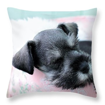 Sleeping Mini Schnauzer Throw Pillow by Stephanie Frey