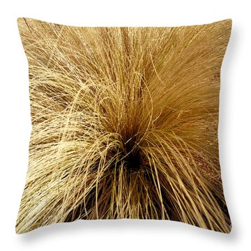 Sleeping Plant Aglow In Winter Sun Throw Pillow by Lena Wilhite