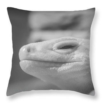 Sleeping Rock Throw Pillow