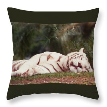 Sleeping White Snow Tiger Throw Pillow by Belinda Lee