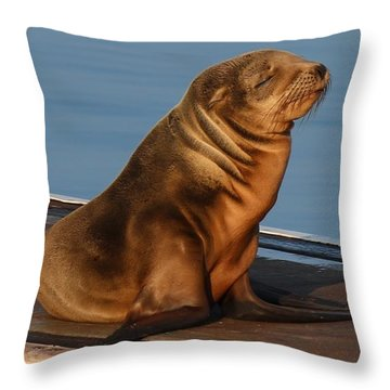 Sleeping Wild Sea Lion Pup  Throw Pillow