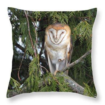 Throw Pillow featuring the photograph Sleepy Barn Owl by Daniel Behm