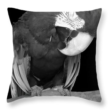Sleepy Bird  There Is A Nap For That B And W Throw Pillow by Barbie Corbett-Newmin