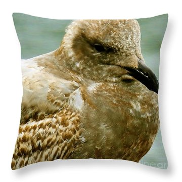 Young Sleepy Gull Throw Pillow