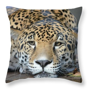 Sleepy Jaguar Throw Pillow