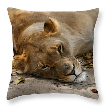 Sleepy Lioness Throw Pillow