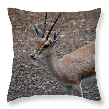 Slender Horned Gazelle Throw Pillow by DejaVu Designs