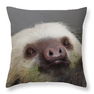 Sloth Throw Pillow by Erica Hanel