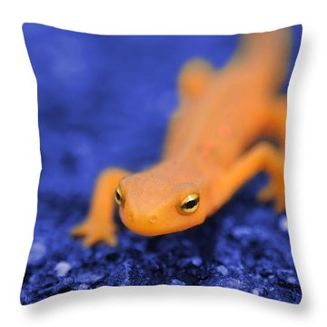 Sly Salamander Throw Pillow by Luke Moore
