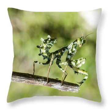 Small And Charming Throw Pillow by Arik Baltinester