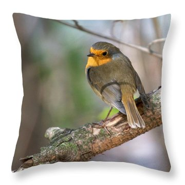 Small Bird Robin Throw Pillow