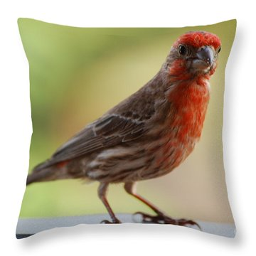 Small Brown And Red Bird Throw Pillow by DejaVu Designs