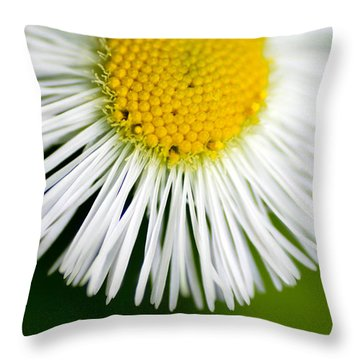 Small Daisy Macro Throw Pillow by Amy Cicconi