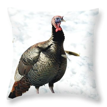 Throw Pillow featuring the photograph Small Jake by Dacia Doroff
