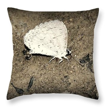 Small Wonder Throw Pillow by Tami Quigley