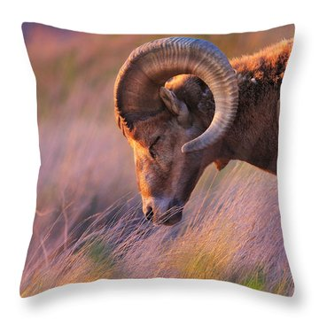 Smell The Wind Throw Pillow