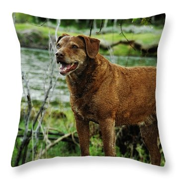Smile Now Throw Pillow by Donna Blackhall