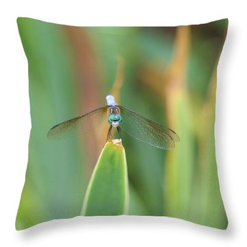 Smiling Dragonfly Throw Pillow