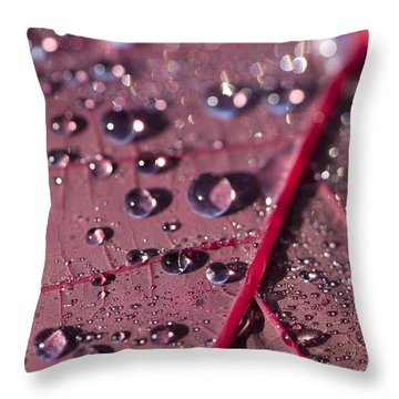 Smoke Bush Droplets Throw Pillow by Anne Gilbert
