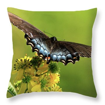 Smoky Mountain Color Throw Pillow by Douglas Stucky