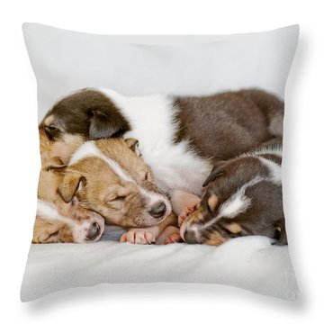 Smooth Collie Puppies Taking A Nap Throw Pillow