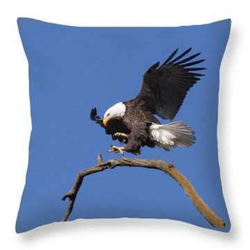 Smooth Landing 6 Throw Pillow by David Lester