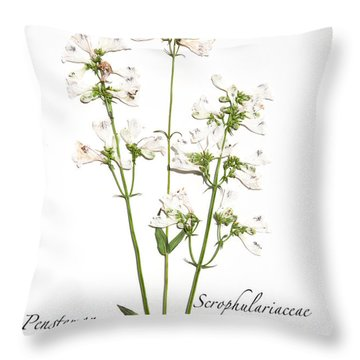 Smooth Penstemon Throw Pillow